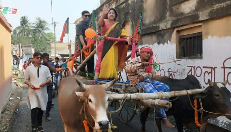 BJP candidate from Chunchura Locket Chatterjee campaigned in a bullock cart spb