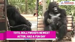 Tinsel town's new hero Toto had a fun day out in Mumbai (Watch video) - ank