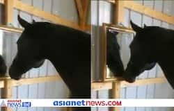 <p>black horse</p>