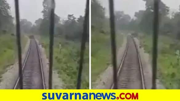 Loco pilots stop train to let elephant cross the track in Alipurduar district in WB pod