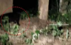 <p>black panther found in athirappilly vazhachal</p>