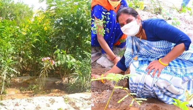 7000 trees in this village project by this Sarpanch