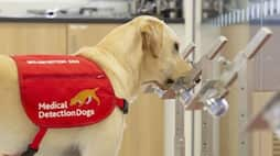 <p>sniffer dogs for medical use</p>