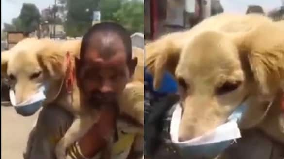 Underprivileged Man Putting His Only Mask On His Dog and says i will not let him die ckm