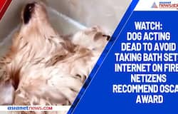 Watch: Dog acting dead to avoid taking bath sets internet on fire; netizens recommend Oscar award