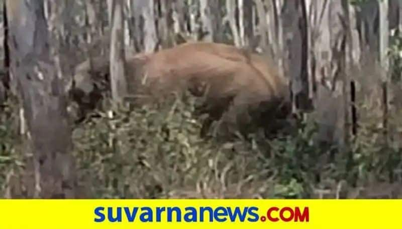 Elephant Back in to the Forest in Dharwad grg