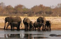<p>elephant Zimbabwe</p>