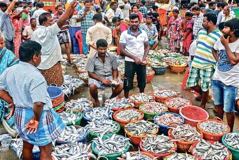fish rates down in kasimedu market