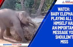Watch: Baby elephant playing all by himself has an important message you shouldn't miss