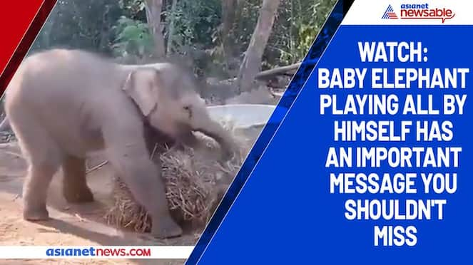 Watch Baby elephant playing all by himself has an important message you shouldn't miss-tgy