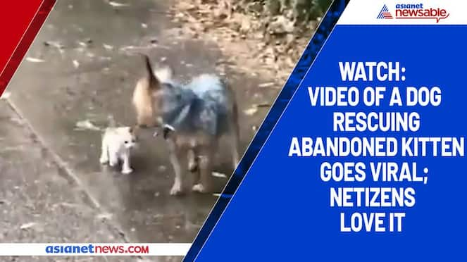Watch Video of a dog rescuing abandoned kitten goes viral; netizens love it-tgy