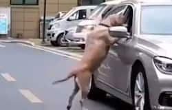<p>Human vs dog</p>