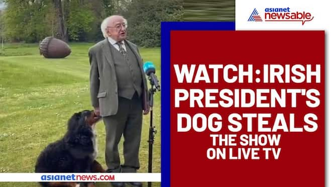 Irish President's Dog Steals The Spotlight During a Live Interview; Watch Video - gps