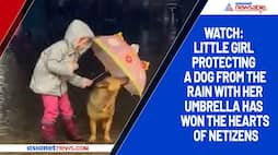 Watch: Little girl protecting a dog from the rain with her umbrella has won the hearts of netizens