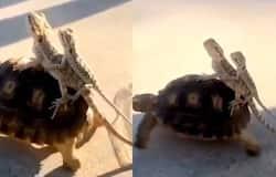 <p>tortoise</p>