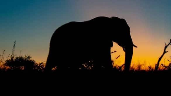 18 wild elephants found dead in Assam