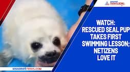 Watch: Rescued seal pup takes first swimming lesson; netizens love it