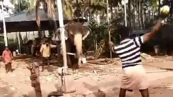 Elephant plays cricket with group of men in village