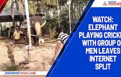 Watch: Elephant playing cricket with group of men leaves internet split