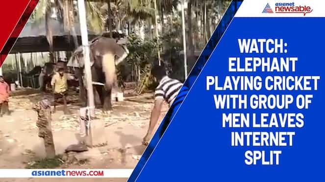 Watch Elephant playing cricket with group of men leaves internet split-tgy