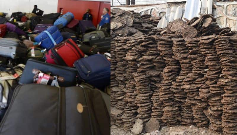 cow dung caked brought in air india passengers luggage destroyed in us airport as it is prohibited