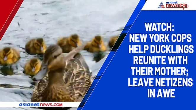 Watch New York cops help ducklings reunite with their mother; leave netizens in awe-tgy