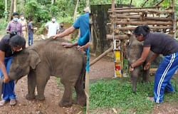 <p>elephant attack</p>