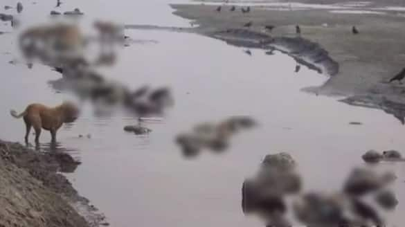 Fake Checker Dead Bodies Floating in the Ganga river Recently Shared Aam Aadmi Party MP Sushil Kumar Gupta Claimed KPY