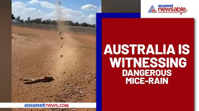 Mice rats 'Raining' from the sky in Australia? Watch this bizarre video - gps