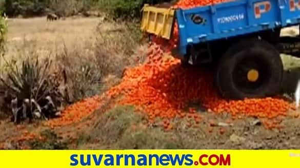 farmers dump tomatoes on roads Due To prices crash  snr