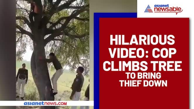 Funny Video: Thief climbs tree then refuses to come down (Watch) - gps
