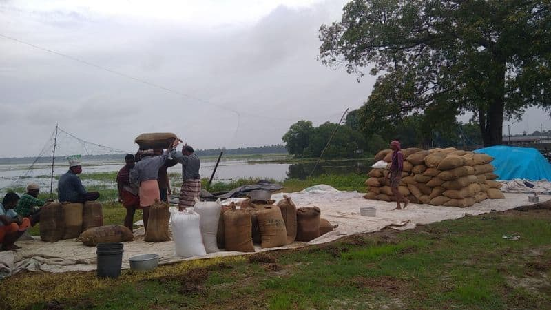 240 acres of paddy harvested in Puncha submerged in water