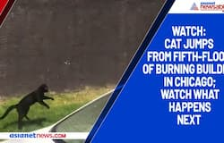 Watch: Cat jumps from fifth-floor of burning building in Chicago; watch what happens next