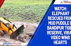 Watch: Elephant rescued from mud puddle in Bandipur Tiger Reserve, viral video wins hearts