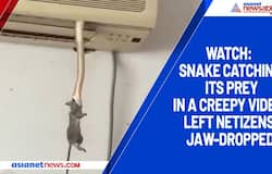 Watch: Snake catching its prey in a creepy video; left netizens jaw-dropped