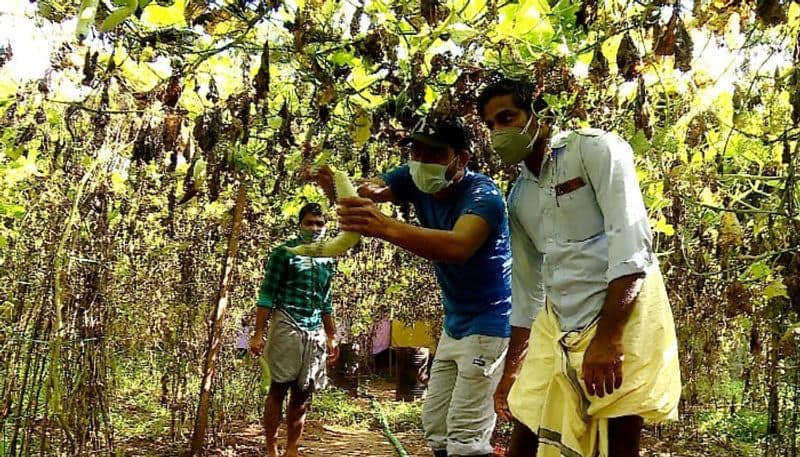 DYFI helps farmer who affected covid to cultivate vegetables