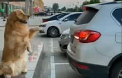 <p>dog viral video&nbsp;</p>