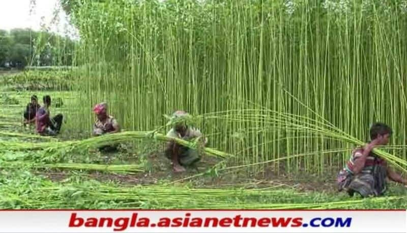 Thousands of jute farmers in Murshidabad are worried about their livelihood before Cyclone Yash RTB