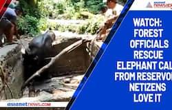 Watch: Forest officials rescue elephant calf from reservoir; netizens love it