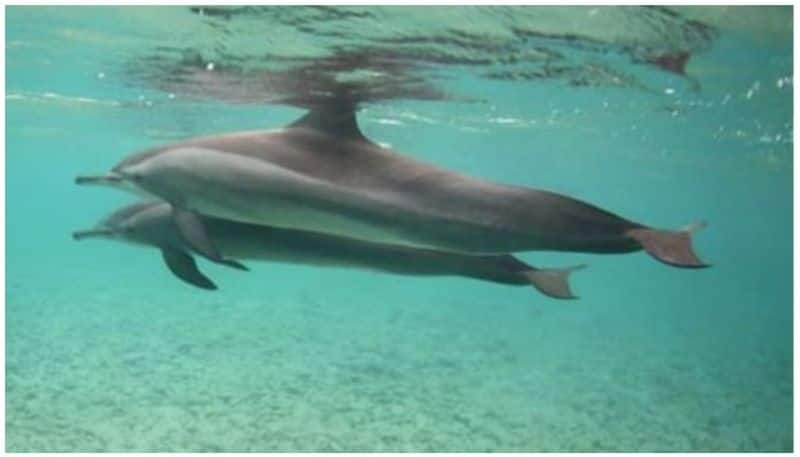 four men stand trial for catching dolphins