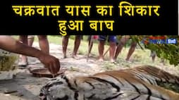Emotional video of forest ranger feeding water to tiger  KPV