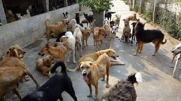 sandalwood stars demands punishment for  stray dogs buried in bhadravathi  snr