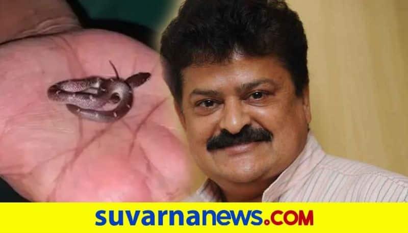 Rare wolf snake found at Kannada actor Mandya Ramesh Mysore house vcs