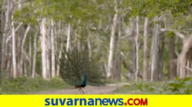 Feel the beauty of Nagarahole in video release by Forest Department dpl