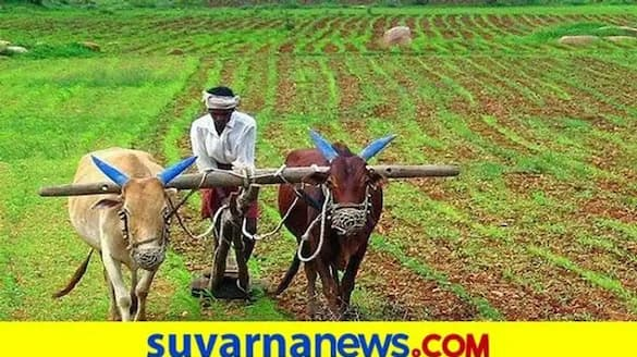 Sowing Completed in 3.06 Lakh Hectares in Karnataka grg