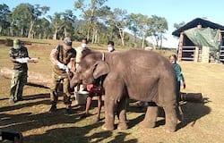 <p>Covid test for elephants</p>