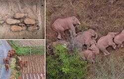 <p>china elephant</p>