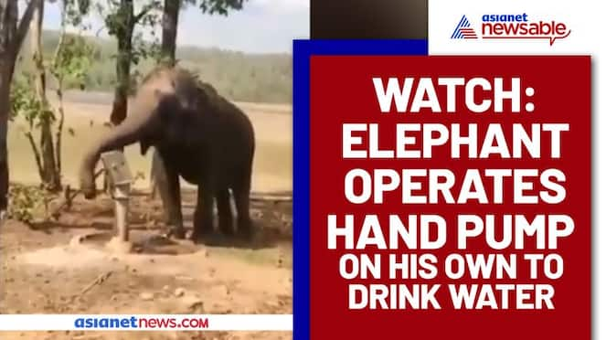 Intelligent Elephant Uses Hand Pump to Drink Water; Watch Video - gps