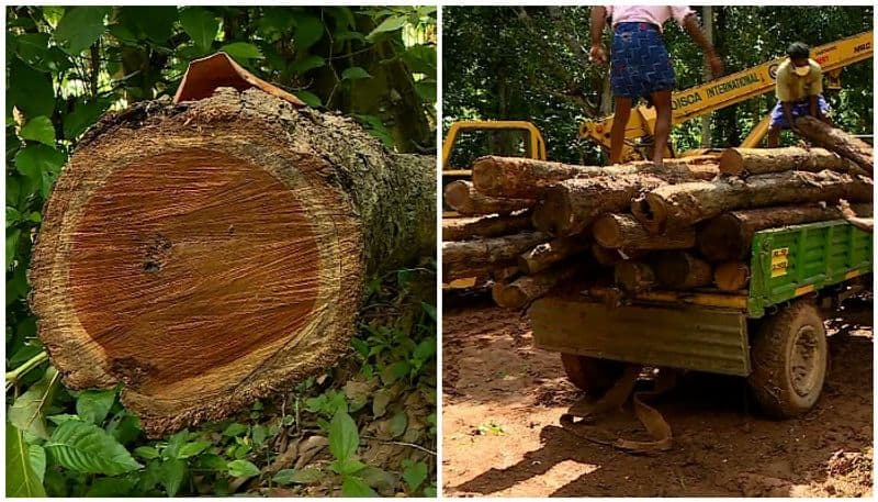 Transporter from kochi informed government about muttil tree felling