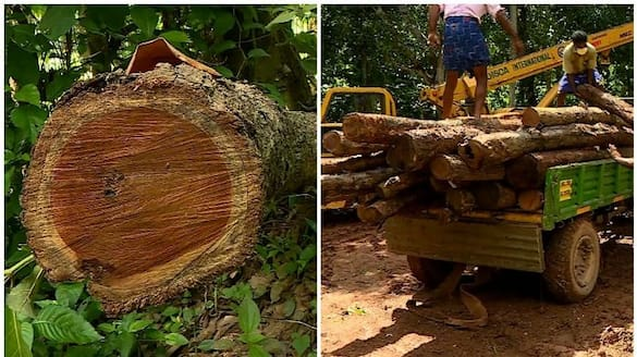 muttil tree scam government decides to conduct thorough investigation to avoid blame police team to meet at thrissur